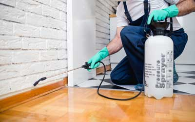 Get a termite inspection from Pest Defense Solutions in Albuquerque New Mexico
