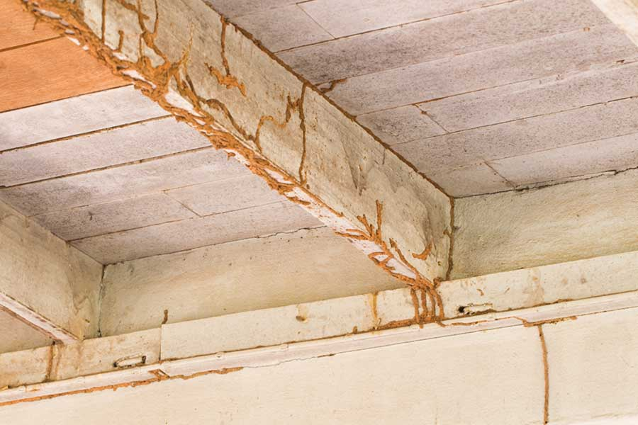 What does termite damage look like in in Albuquerque NM - Pest Defense Solutions